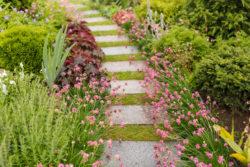 Walkway in garden with paving